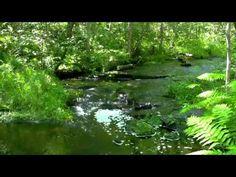 جنة الارض المياه وزقزقة العصافير