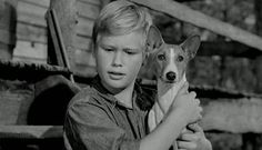 Vintage Photo of a young boy holding his best pal, a Basenji puppy. African Hunting Dog, Hunting Dogs, Basenji Puppy, Pharaoh Hound, Best Pal, Old Toys, Female Images, Funny People, Cute Dogs