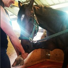 4 Stretches You Should Do With Your Horse Before and After Rides