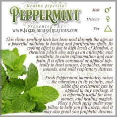 While this herb is a must-have in any kitchen or green witch's garden, take special care if you plant it in the ground rather than a pot -- it can (and will!) spread like wildfire if not contained. // #kitchenwitch #peppermint #mint #herbalmagick #magick #purification #healing #love #money #psychic