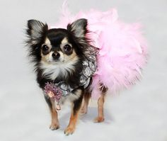 Platinum Princess Feather Harness Dog Dress by KOCouture on Etsy