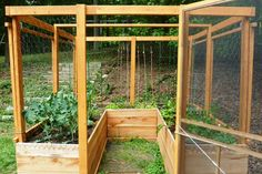 Enclosed raised bed garden, deer proof, square foot gardening, vertical gardening