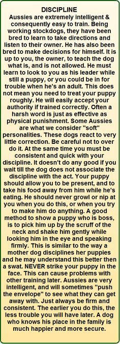 Australian Shepherd Blue Merle - i love fenrir! Mini Australian Shepard, Australian Shepherd Training, Aussie Shepherd, Australian Shepherd Dogs, Shepherd Puppies, Toy Aussie, Aussie Puppies, Mini Aussie, Puppies Tips