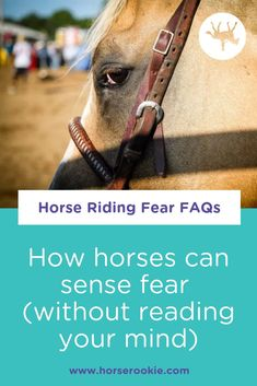 Can horses pick up on the fact that you're not 100% confident? Probably. Do they care? Only if they think that the reason you're nervous is that there's a sabertooth tiger hiding in the barn. #horseridingfear #equestrianfear #nervoushorserider #horseridingforbeginners #horseridingfall Interesting Facts About Horses, Horse Exercises, Horse Care Tips, Horse Riding Tips, Western Riding, Horse Grooming, Riding Lessons, All About Horses, English Riding