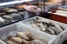 mercado municipal mercadao sp coisas imperdiveis peixes frutos do mar (1)