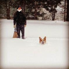 Maple and Walnut would love a corgi worth of snow. Especially Walnut. IMG_0410.JPG (1600×1600)