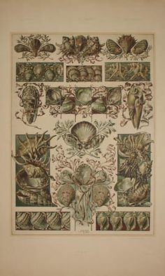Art Nouveau Seashells by Anton Seder from Das Thier in der Decorativen Kunst, Vienna: 1896-1909, a sourcebook intended to provide inspiration for designers of fabrics, wallpaper, ceramics, book illustrations, posters and advertisements.