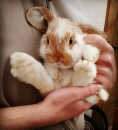 Spiffy Pet Stuff for rabbits! How cute is this little fellow? Be sure you know what you need to take good care of your pet rabbit BEFORE you get one.