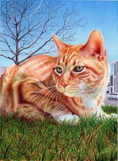 Animal Portrait Drawings by Samuel Silva