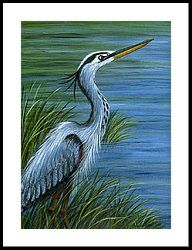Great Blue Heron Framed Print by Sandra Estes