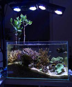 East1 - 2016 Featured Aquariums - Featured Aquariums - Monthly Featured Nano Reef Aquarium Profiles - Nano-Reef.com Forums