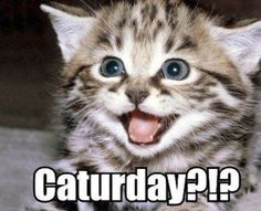 40 Yummy Yummy Pictures of Cute Kittens - Tail and Fur Cute Kittens, Cats And Kittens, Kitty Cats, Bengal Kittens, Cats Meowing, Tabby Cats, Siamese Cats, Funny Cat Videos, Funny Cats