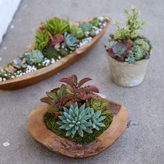 Succulent arrangements by dalla vita
