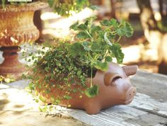 Create a Terracotta Pig Planter by using Cost Plus World Market's Pig Terracotta Grill. It's easy, remove the grill plate and insert the plant. That's it! >> #WorldMarket Inspirations by Members #DIY