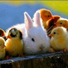 Farm babies...