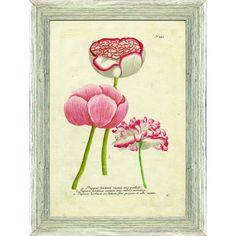Botanical : Botanicals