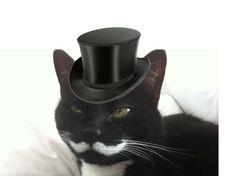 Classiest cat