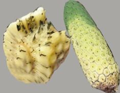 Monstera Deliciouso is a succulent tropical fruit which grows on a very large-leafed philodendron in hot and humid areas. The fruit is long and green, and has small scale-like sections for the outer skin. It is a native of Mexico and Guatemala. The fruit must only be eaten mature when the outer green sections fall of their own accord to reveal a white interior flesh on a hard core.