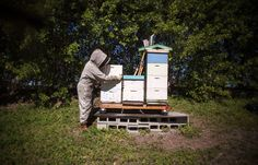 Most new beekeepers make the mistake of starting with just one hive. It makes sense. Beginners are often hesitant to get any bees at all! A second hive mig