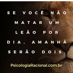 Se você não matar um leão por dia, amanhã serão dois. Frases motivacionais Miracle Morning, Pretty Quotes, Some Words, Good Vibes, True Stories, Inspire Me, Quote Of The Day, Life Lessons, Best Quotes