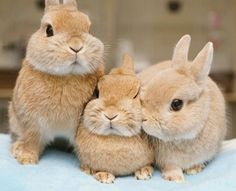 3 wittle bunny rabbits! ❤