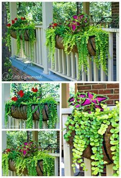 Container Gardening MUST PIN post for awesome curb appeal! Best ideas for hanging baskets to turn your front porch planters into instant WOW! DIY flower baskets that you can make this weekend! // 3 Little Greenwoods - Planters - ideas of Planters Front Porch Planters, Deck Railing Planters, Front Porch Flowers, Front Porch Garden, Summer Front Porches, Front Porch Landscape, Summer Porch Decor, Front Flower Beds, Porch Railings