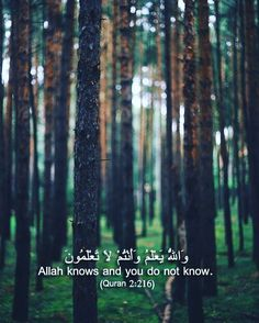 """""""Perhaps you hate a thing and it is good for you; and perhaps you love a thing and it is bad for you. And Allah Knows, while you know not."""" -- Surah Al-Baqarah [2:216]"""
