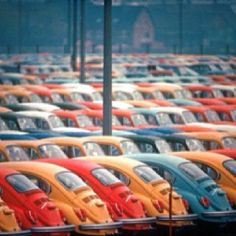 VW beetles...oh my, where is this?