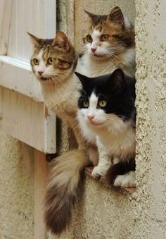 I Love Kitties - Hey it's the Cats Hole in the Wall Gang