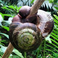 Snailception. #getaroom #beautiesofnature #elyunque #puertorico #pr