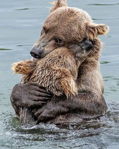 "Best WILDLIFE Photos & Videos on Instagram: ""Bear hugs! Photo by @glenalsworthjr_ . . . #animalelite #animal_sultans #animallovers #animalplanet #bigcats #bbcearth @bbcearth…"""