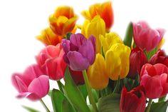 8 Jahre Selbständigkeit: Wie es begann und was meine Wunschkunden miteinander gemein haben. Danke euch allen, es waren tolle 8 Jahre! Content, Rose, Plants, Mai, Garden, Flowers, Things To Do, Pink, Plant