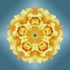 Radiance - Yellow Rose Flower Mandala