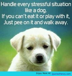 Handle Every Stressful Situation Life Love Quotes