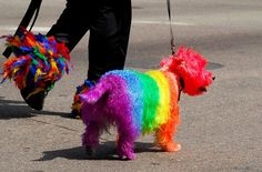 Is this the most colourful dog you've ever seen?