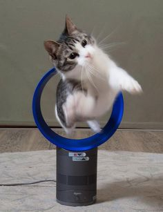 Play with a dyson-electric fan