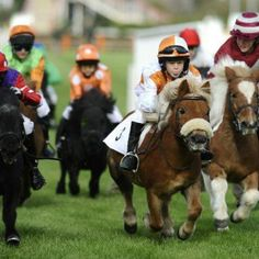 Too cute! Miniature horse racing looks so much fun! (If only I were smaller, or a child again - sigh!) #loveit