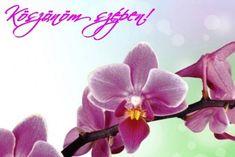KÖSZÖNÖM KÉPESLAPOK - tanitoikincseim.lapunk.hu Emoji, Happy Birthday, Floral, Flowers, Plants, Betty Boop, Google, Acre, Happy Brithday