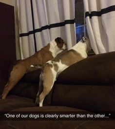Nearly spit out my coke laughing at this one. Pay close attention to their views...  #funnydogs
