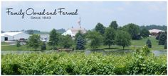 Huber's Orchard, Winery, & Vineyards