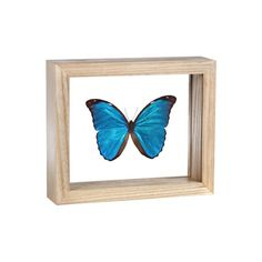framed butterfly - My Grandmother always wanted one of these. I would love to have one displayed in our home. Especially in our nature-themed living room.