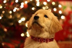 i want this under my tree!