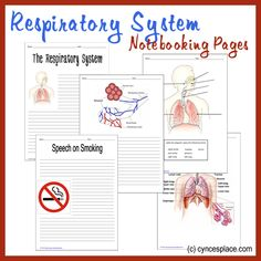 Grab a copy of these FREE respiratory system notebooking pages for your anatomy lessons!