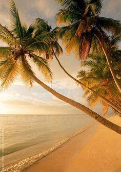 Palm trees > tropical Caribbean beach. Ocean, sand . . . paradise! More