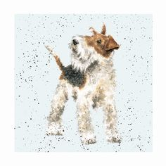 Animal Paintings, Animal Drawings, Wirehaired Fox Terrier, Wire Fox Terrier, Fox Terriers, Watercolor Animals, Watercolour, Wrendale Designs, Dog Cards