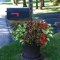 Planter around mailbox. Filled with coleus. Mailbox Planter, Mailbox Garden, Diy Mailbox, Mailbox Landscaping, Outdoor Landscaping, Landscaping Tips, Lawn And Garden, Outdoor Decor, Mailbox Ideas