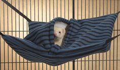 """Hanging Nap Sack/Hideout for Ferrets Measures 15.5"""" x 13"""". Assorted Colors Unique 2-in-1 ferret cage accessory is a comfy hammock and a cozy hanging sleep sack. Your ferret can lazily lounge on the hammock for a quick snooze. He can also nestle inside the warm faux lambswool lined hide-away center to satisfy burrowing instincts. Nap Sacks feature a side entrance to the hide-away center, adjustable nylon straps and included attachment clips. To hang, simply attach the four included clips to…"""