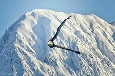 Soaring free over Alaska