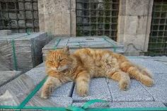 A chubby #Istanbul street #cat sprawls next to an ancient monument.