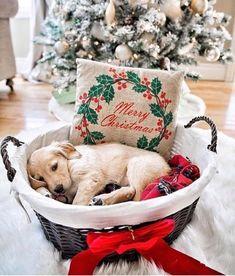 www.joliesse.ru вдохновение новый год рождество украшение на новый год декор подарок щенок лабрадор